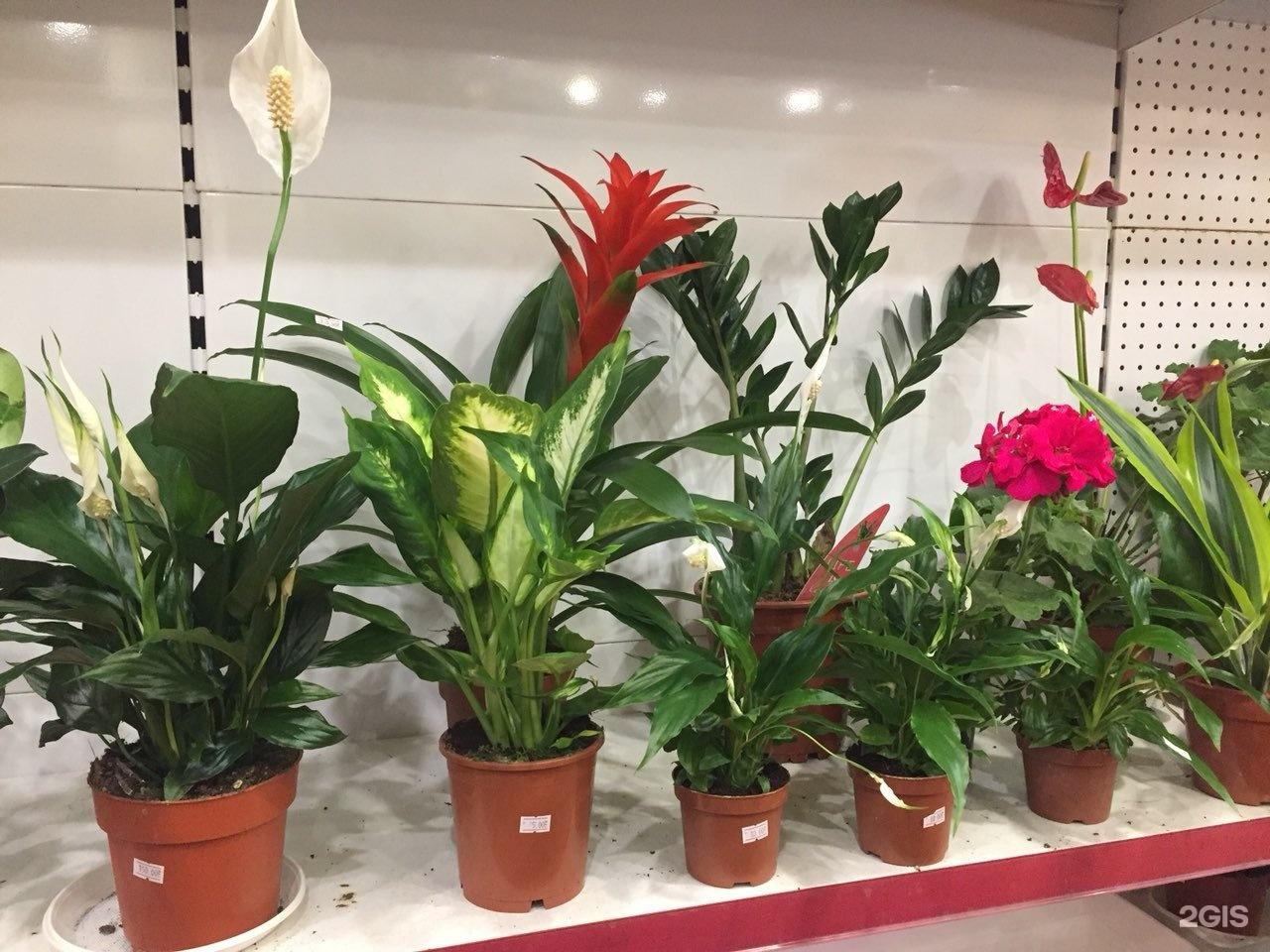 Цветов, где в волгодонске купить комнатные цветы