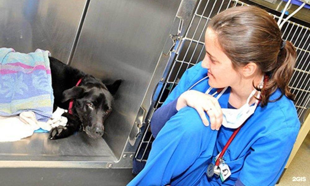 цены в ветеринарных клиниках в нижнем новгороде термобелья