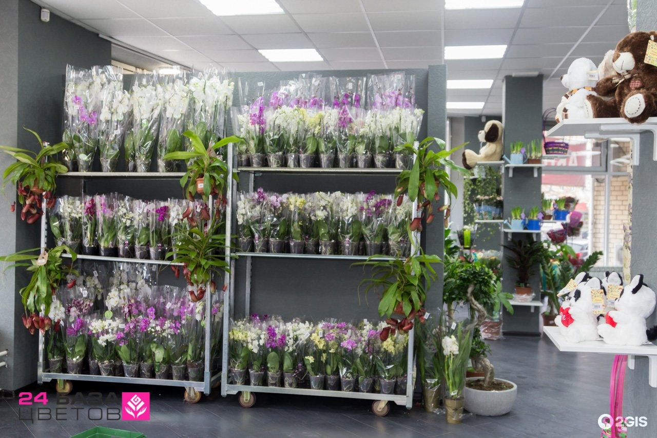 Живые цветы оптом каталог цены