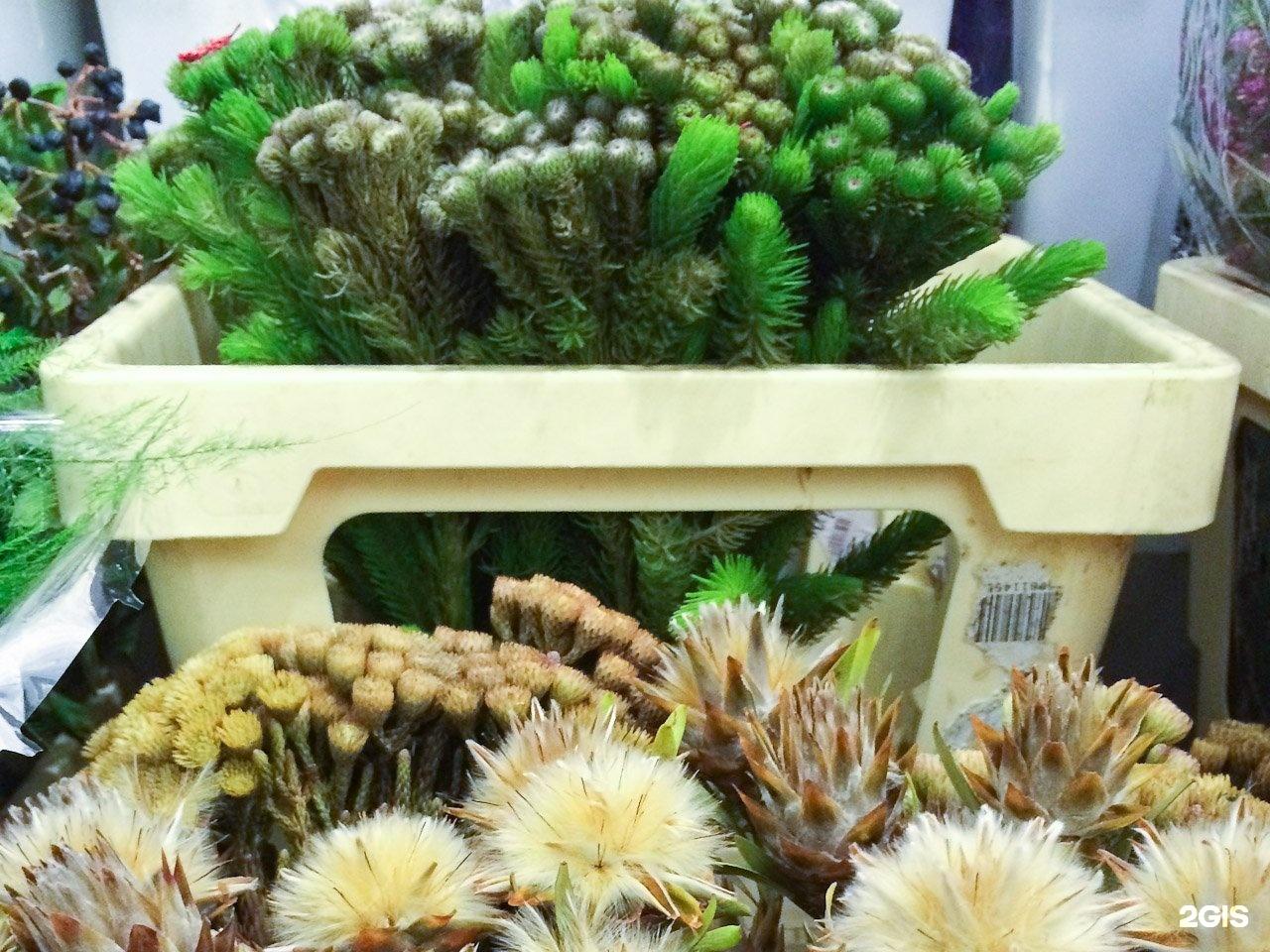 Оптовые базы цветов в ярославле