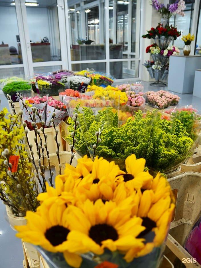 Совхоз имени ленина цветы оптом и розницу в горшках, оптом район митино