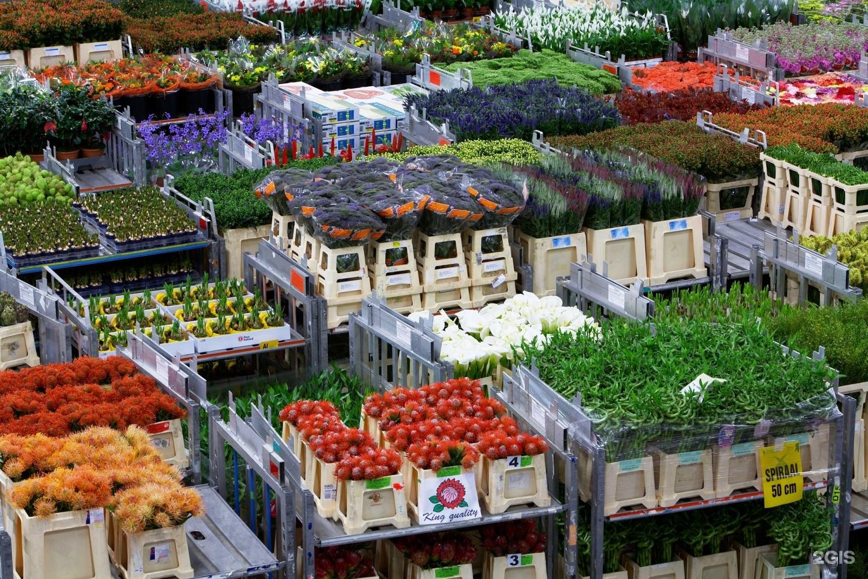 Анемоны лесной, цветы оптом новая голландия
